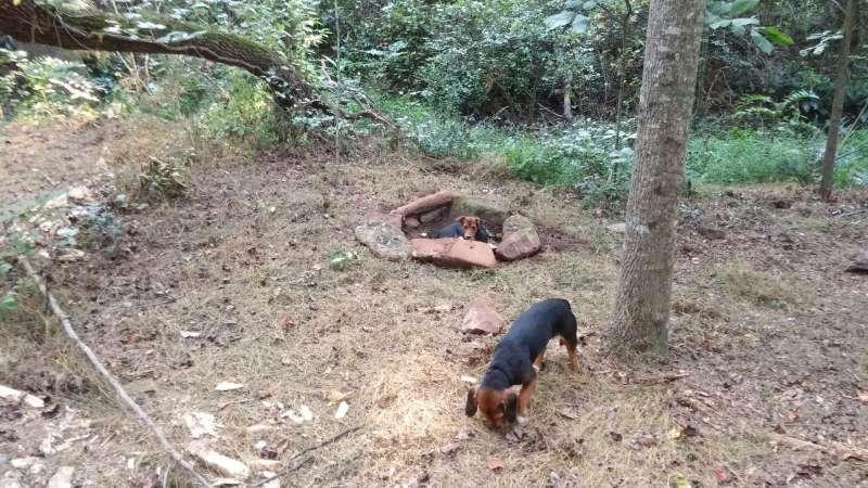 eden-oaks-vineyard-campground-eden-oaks-vineyard-campground-4