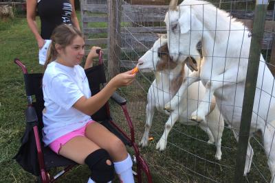 Amber-goats