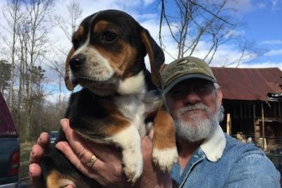 Beagle-pup-Roy
